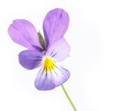 Flora di estate Immagini Stock