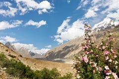 Flora di Karakorum nel Pakistan del Nord Fotografia Stock