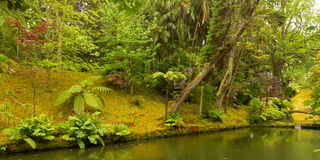 Flora diversity of Terra Nostra Garden in Azores, Portugal. Royalty Free Stock Image