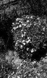 Flora do deserto fotos de stock royalty free