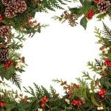 Flora do inverno fotos de stock