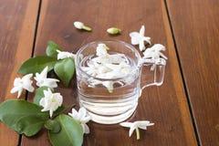 Flora do jasmim das flores brancas local do flutuador de Ásia na água imagem de stock royalty free