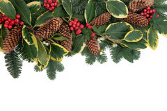 Flora do Natal imagens de stock