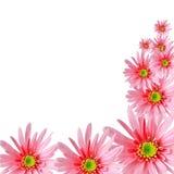 Flora dolce con spazio su backgroun isolato bianco Immagini Stock Libere da Diritti