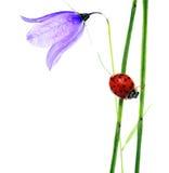 Flora e coccinella fotografia stock libera da diritti