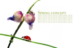 Flora e coccinella Immagine Stock Libera da Diritti