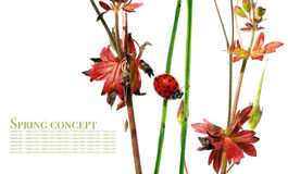 Flora e coccinella Fotografie Stock