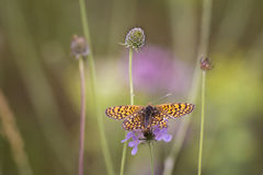 Flora e fauna Fotografia de Stock Royalty Free