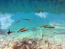 Flora e fauna do jezera de Plitvicka do parque nacional dos lagos Plitvice ou do parque do nacionalni, patrimônio mundial natural imagens de stock royalty free
