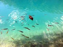 Flora e fauna do jezera de Plitvicka do parque nacional dos lagos Plitvice ou do parque do nacionalni, patrimônio mundial natural fotos de stock royalty free