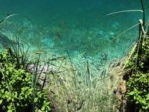 Flora e fauna do jezera de Plitvicka do parque nacional dos lagos Plitvice ou do parque do nacionalni, patrim?nio mundial natural imagem de stock royalty free