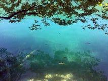 Flora e fauna do jezera de Plitvicka do parque nacional dos lagos Plitvice ou do parque do nacionalni, patrim?nio mundial natural fotografia de stock