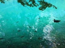 Flora e fauna do jezera de Plitvicka do parque nacional dos lagos Plitvice ou do parque do nacionalni, patrim?nio mundial natural fotos de stock