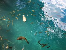 Flora e fauna do jezera de Plitvicka do parque nacional dos lagos Plitvice ou do parque do nacionalni, patrim?nio mundial natural foto de stock