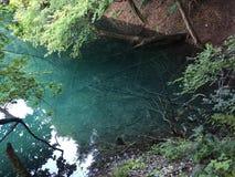 Flora e fauna do jezera de Plitvicka do parque nacional dos lagos Plitvice ou do parque do nacionalni, patrim?nio mundial natural fotografia de stock royalty free