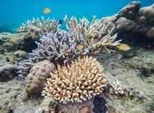 Flora e fauna do mar fotos de stock royalty free
