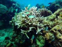 Flora e fauna do mar foto de stock royalty free