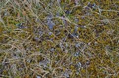 Flora e fauna em Islândia sul fotos de stock royalty free