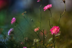 Flora e fauna a Fraser Hills Immagini Stock Libere da Diritti