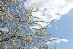 Flora e fauna na primavera fotografia de stock royalty free