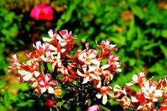 Flora e fauna no leh fotografia de stock