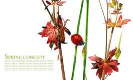 Flora e joaninha fotos de stock