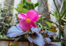 A flora e a natureza no jardim imagens de stock royalty free