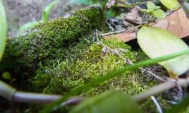 A flora e a natureza no jardim fotografia de stock