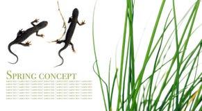 Flora e salamander Fotografia Stock Libera da Diritti