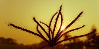 Flora e sol, abstratos Fotos de Stock Royalty Free
