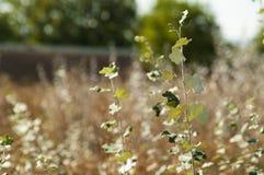 Flora en el campo Fotografía de archivo