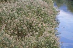 Flora en el río Sarca foto de archivo
