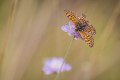 Flora en fauna Stock Foto