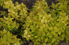 Flora en fauna Royalty-vrije Stock Foto's