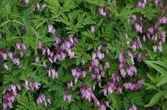 Flora en fauna Royalty-vrije Stock Foto