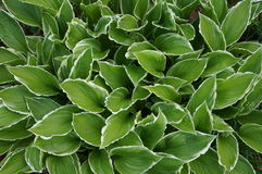 Flora en fauna Stock Fotografie