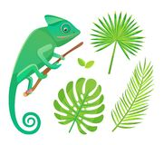 Flora en Fauna, Kameleon en Fern Leaf Vector vector illustratie