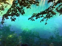 Flora en fauna van Plitvice-Meren Nationale Park of van het nacionalnipark jezera van Plitvicka, natuurlijke de werelderfenis van stock afbeelding