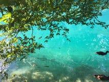Flora en fauna van Plitvice-Meren Nationale Park of van het nacionalnipark jezera van Plitvicka, natuurlijke de werelderfenis van stock foto