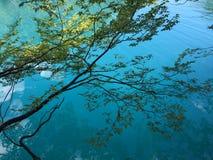Flora en fauna van Plitvice-Meren Nationale Park of van het nacionalnipark jezera van Plitvicka, natuurlijke de werelderfenis van stock foto's