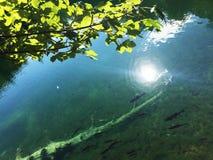Flora en fauna van Plitvice-Meren Nationale Park of van het nacionalnipark jezera van Plitvicka, natuurlijke de werelderfenis van royalty-vrije stock foto