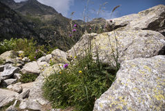 Flora en las montañas de los Pirineos españoles foto de archivo