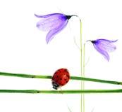 Flora en onzelieveheersbeestje stock foto's
