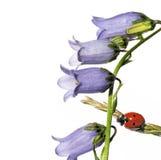 Flora en onzelieveheersbeestje royalty-vrije stock foto