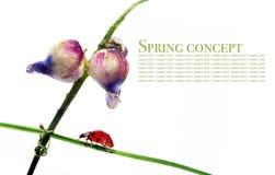 Flora en onzelieveheersbeestje royalty-vrije stock afbeelding