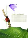 Flora en onzelieveheersbeestje stock fotografie