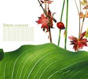 Flora en onzelieveheersbeestje stock foto