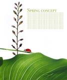 Flora en onzelieveheersbeestje stock afbeelding
