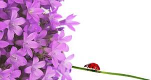 Flora en onzelieveheersbeestje royalty-vrije stock foto's