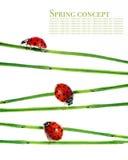 Flora en onzelieveheersbeestjes Stock Foto's
